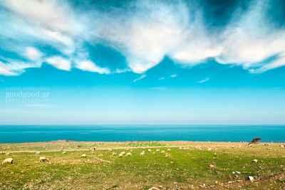 Φωτογραφία με πρόβατα να βοσκάνε δίπλα στην θάλασσα κάτω απ' τα σύννεφα