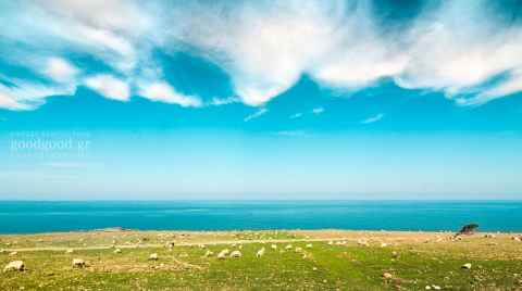 Photograph of sheep grazing by the sea under the cloudy sky