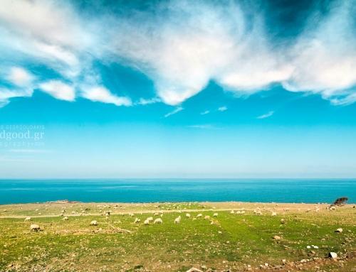 Προβατάκια Στην Γη… Προβατάκια Στον Ουρανό…